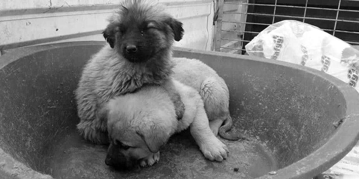 adoption-info